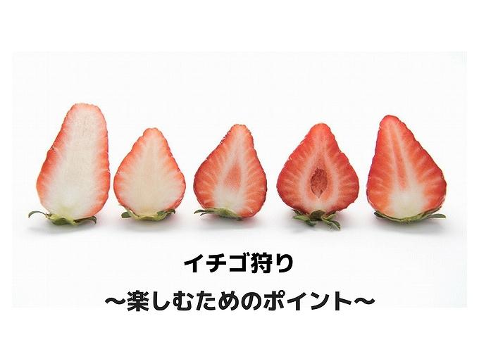 イチゴ狩り 楽しむためのポイント