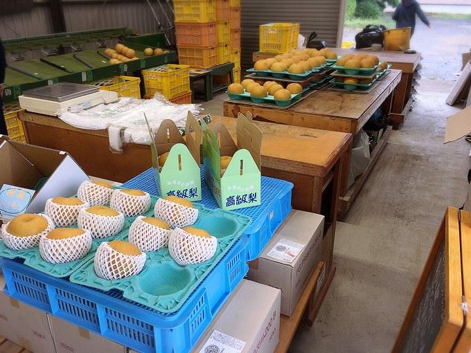 【新登場】埼玉県産の彩玉を使った梨サイダー☆販売している農園や店舗情報も
