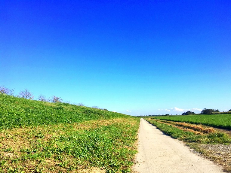 【鴻巣市】コスモスアリーナふきあげ 約1200万本のコスモスが荒川河川敷を染めるスポット【10月中旬~見ごろ】