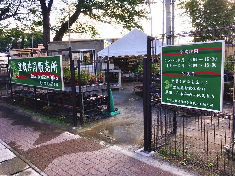 【お出かけ】大宮盆栽美術館 さいたま市 盆栽だーやワークショップ・イベントも開催中☆世界に誇る日本の文化
