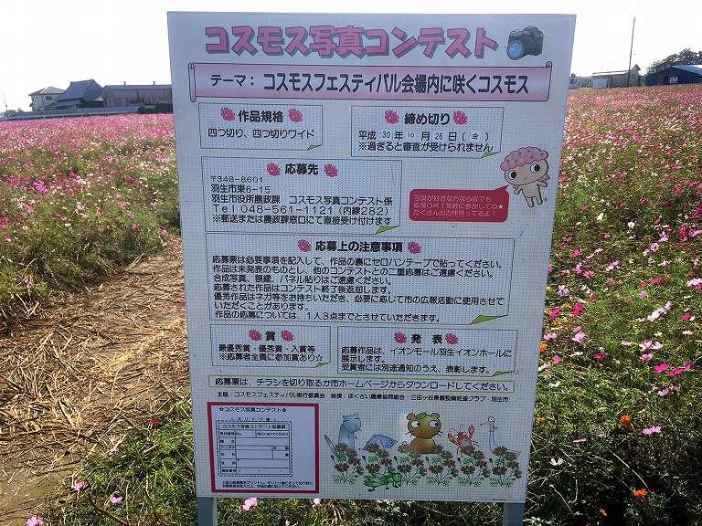 【お出かけ】コスモスフェスティバルがちょうど見ごろ☆羽生市清掃センター脇