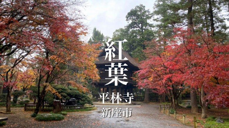 新座市 平林寺 |広大な敷地を染める秋の紅葉に感動!見どころは?