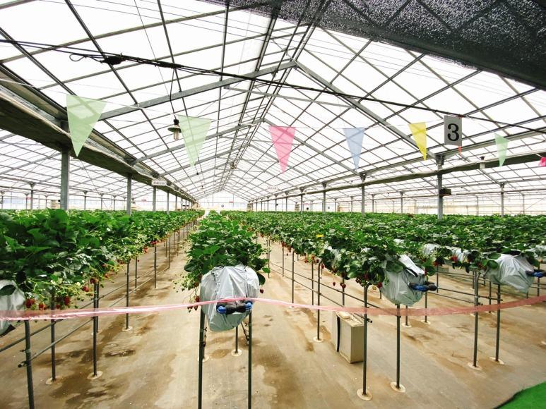 【いちご狩り】所沢市 北田農園 いちごのマルシェ食べ放題体験レポ【クーポン使用】