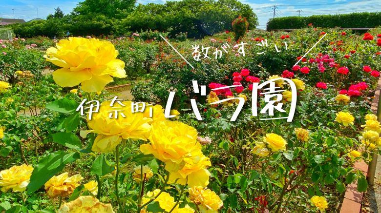 埼玉・伊奈町にあるバラ園の見ごろは?400種5000株が咲くぞ【春・秋にはバラまつりも】