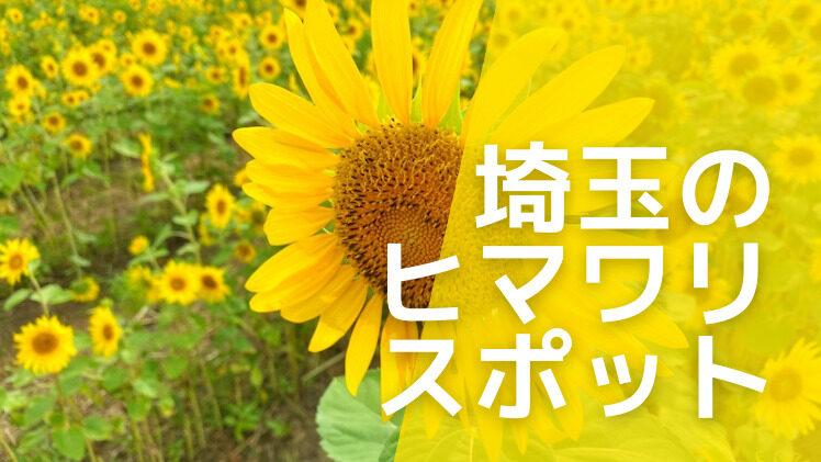 埼玉・川越市 伊佐沼公園の向日葵が満開!例年の見ごろは8月上旬くらいから